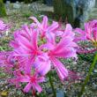 初秋の京都府立植物園