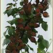 果樹&果実色々