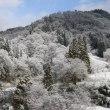 キレイな樹氷
