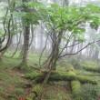 八経ヶ岳 1915m 弥山 1895m 雨のオオヤマレンゲ