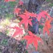 伊佐沼 冒険の森
