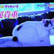 11/17 生き物に この猫顔が日本人です