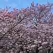 春がきた♪