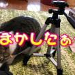 ♀猫こむぎ&♂猫だいず動画を撮るために三脚を購入