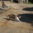 猫も乾く季節です。