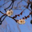 昭和記念公園→神大植物園へ