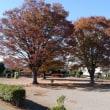 冬の羽生にて ―城沼公園のケヤキ―
