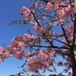 京都3条の春