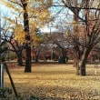 京都のなごりの秋