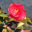 今日15日高知で桜開花宣言!!凄い。 27日は11時半から「桜の花見」…