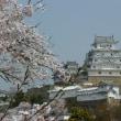 姫路城の桜②