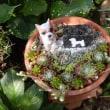 庭に作った小さな慰霊碑