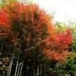 昨日鎌倉を紅葉見ハイキング