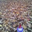 落ち葉の物語