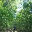 木漏れ日、散策。~三郡山~