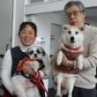 1460   聴導犬しょうちゃん 2015年度3頭目の認定試験合格 初普及仕事は、インターペット