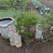 小田原の友人の畑で野菜を沢山もらって来た