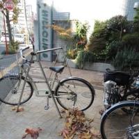 牛田通りの広葉樹