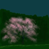 さあ桜ですよ!
