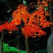 小石川後楽園の紅葉です。