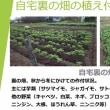 裏の畑での農作業に出かけよう!!!
