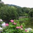 2018年・公園~梅雨の花 その5