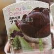 チューリップ ブラック 八重 +フリンジ咲き