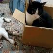小さくても箱は、箱・・・・。