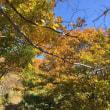 紅葉 大倉山のベンチ