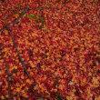 秋景の終景