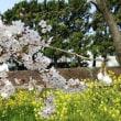 春の五色浜公園