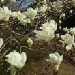 晴れだが少し冷えている春日、2代目のメイはー娘の京都で元気