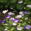 庭の花 (2018/04/22)