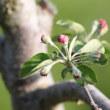 本日休業/リンゴの木プルーンの木