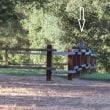 YSI近く 柵の上に止まるノスリ