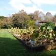 10月20日 活動報告 環境整備と見本園の様子