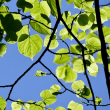 葉の裏と表