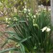 素敵な花木たち&恐るべしアマゾン!