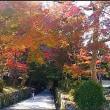 興聖寺の紅葉