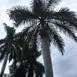 カリブ海、クルーズ、4日目❗ジャマイカ