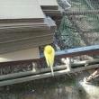 寒川町シクラメン生産者。谷澤園芸。~歳末火災特別警戒中!!火の用心!!~
