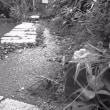 桜坂から坂の下の家へ・・・途中のビオトープにて