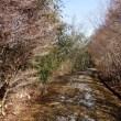 フラワーセンター飯盛山散策