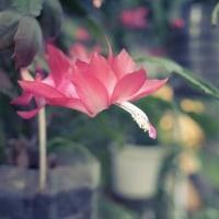 いつも見ても謎の花