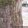 ニホンアマガエル(冬眠?)(富山市営農サポートセンター/富山市月岡町)