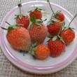 ☆桃苺収穫~酸甘化陰の養生