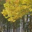 黄葉の白川公園 P1