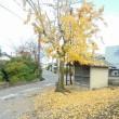 散歩の風景、地蔵堂に落ち葉