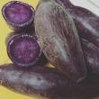 新物 「紫芋」