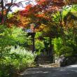 鎌倉文学館から海蔵寺へ